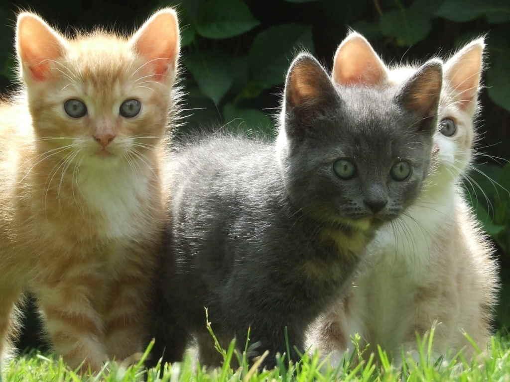 Котята гуляют