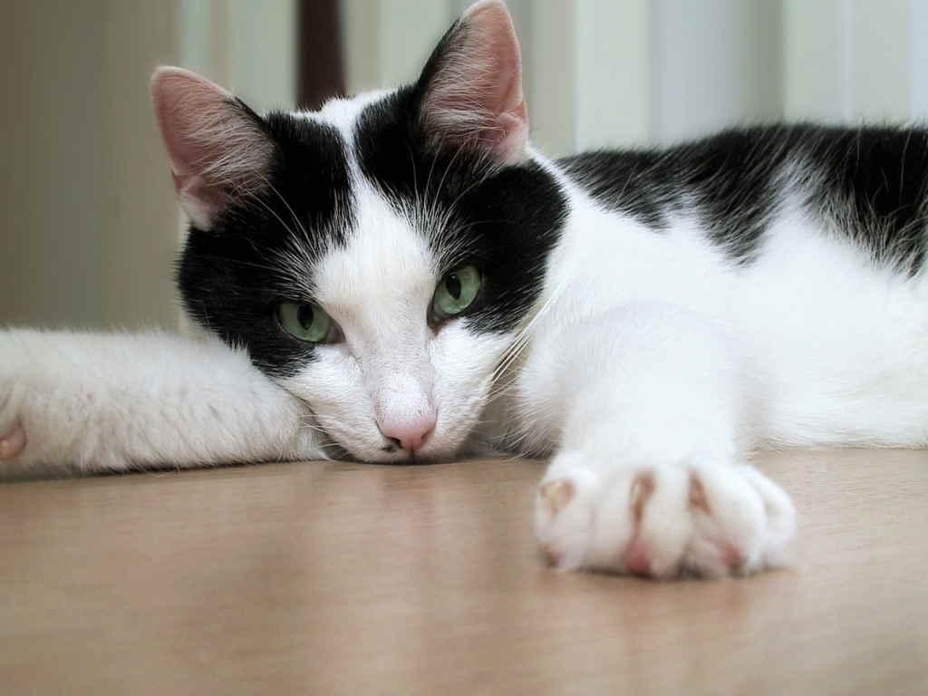 Кошка тянется