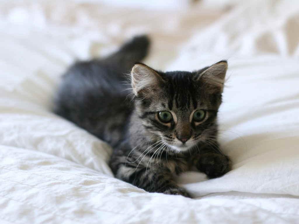 Котенок на покрывале