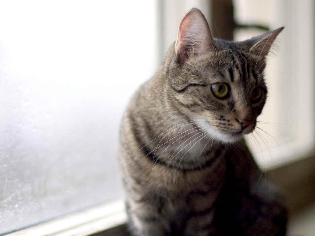 Кот у окна