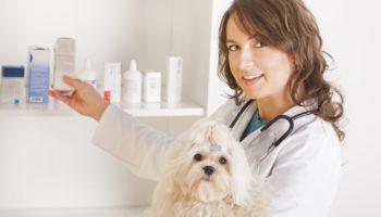 Как глистогонить собаку или щенка перед прививкой