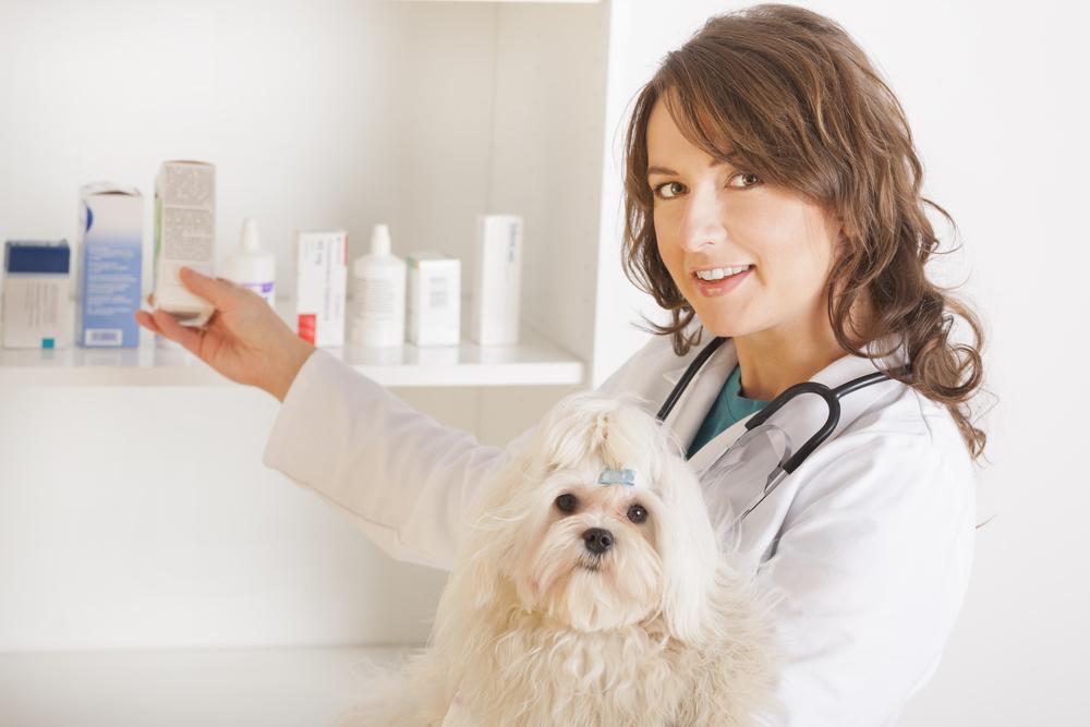 Понос у собаки после вакцинации от глистов