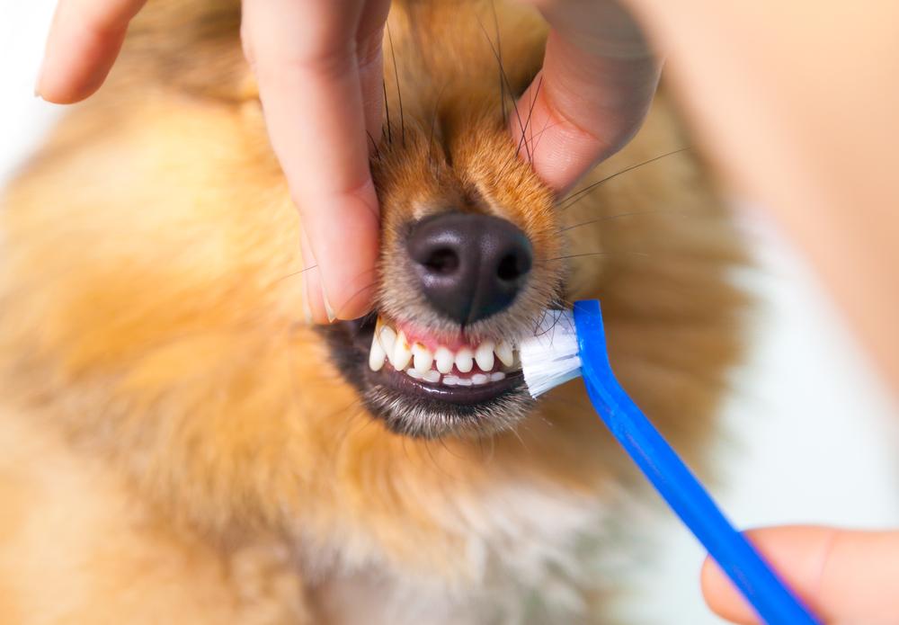 чистка зубов щеткой