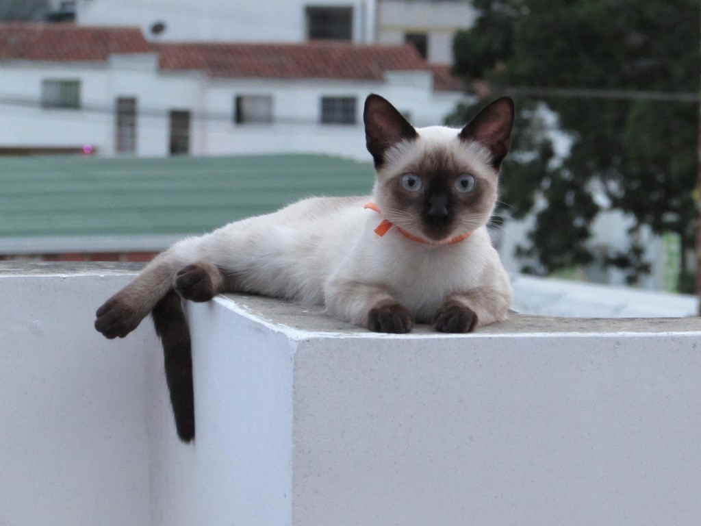 Кошка с бантиком