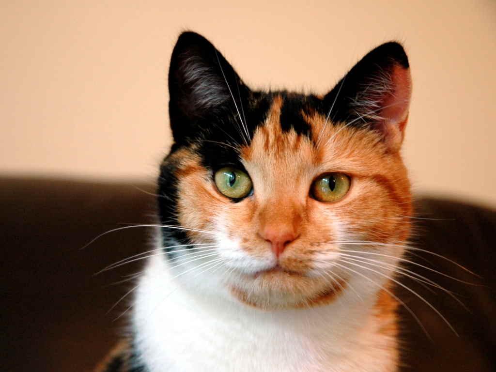 Кошка с ухмылкой