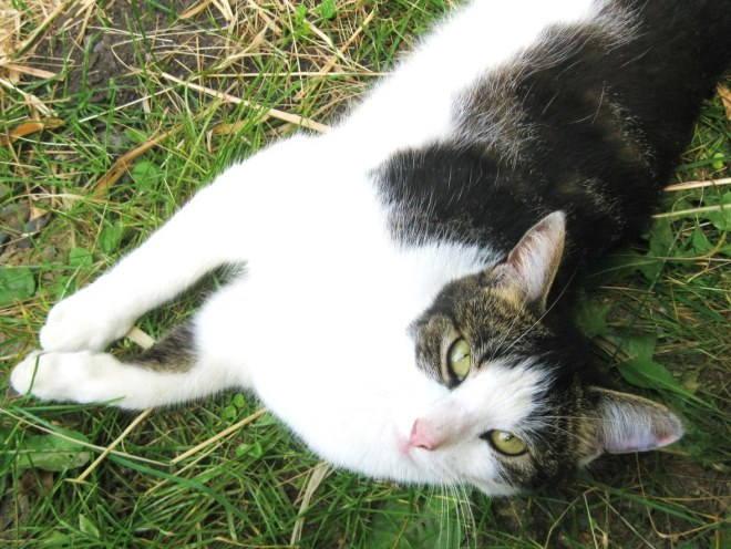 Кот отдыхает на природе