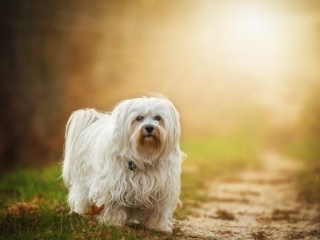 Собака на фоне солнца