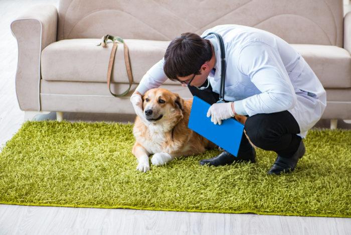 Признаки простатита у собак