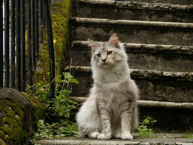 Кот сидит возле ступенек