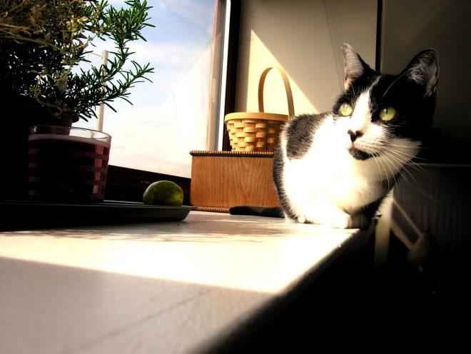 Кот прячется от солнца