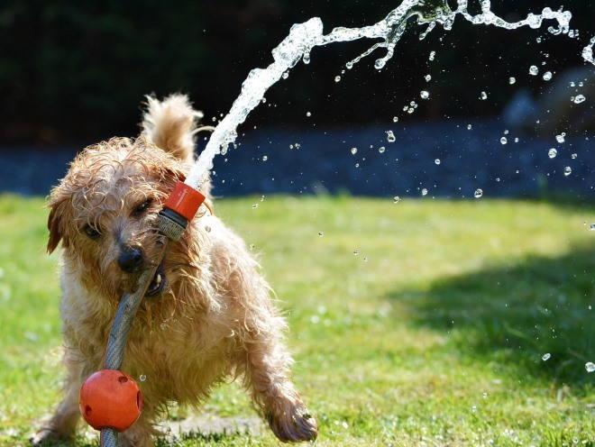 Собака во время игры
