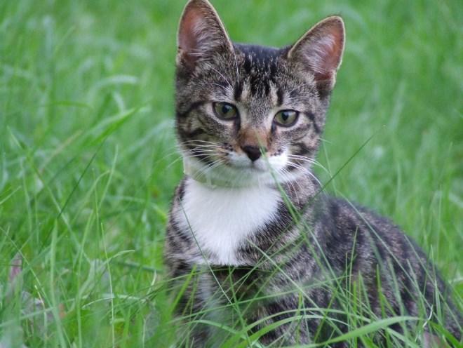 Кот сидит в траве