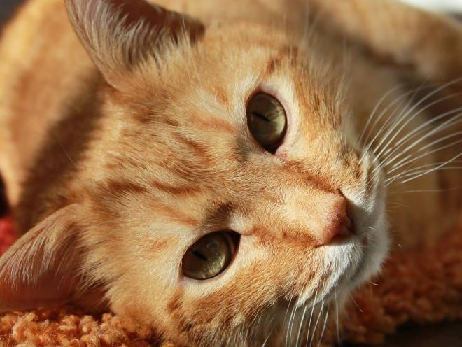 Рыжий кот лежит на коврике