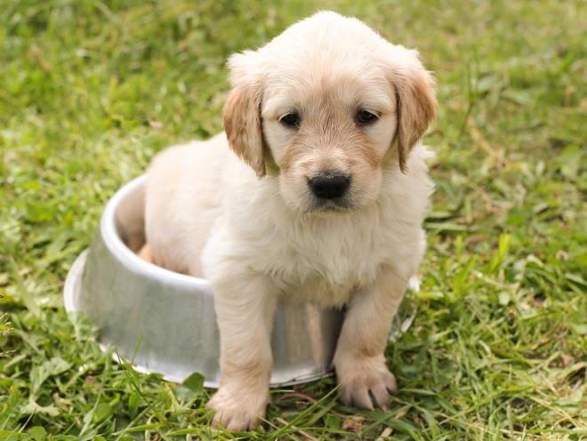 Почему щенок поносит, и как лечить малыша от диареи