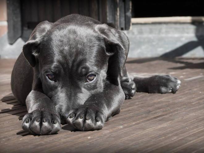 Зеленый понос у щенка причины лечение