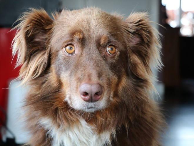 Собака смотрит грустными глазами
