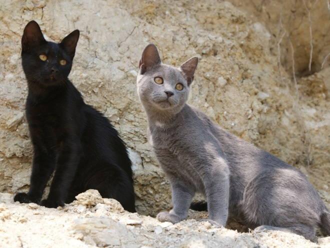 Котята гуляют среди камней