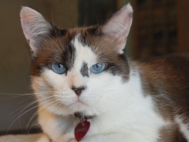 Кот настороженно смотрит