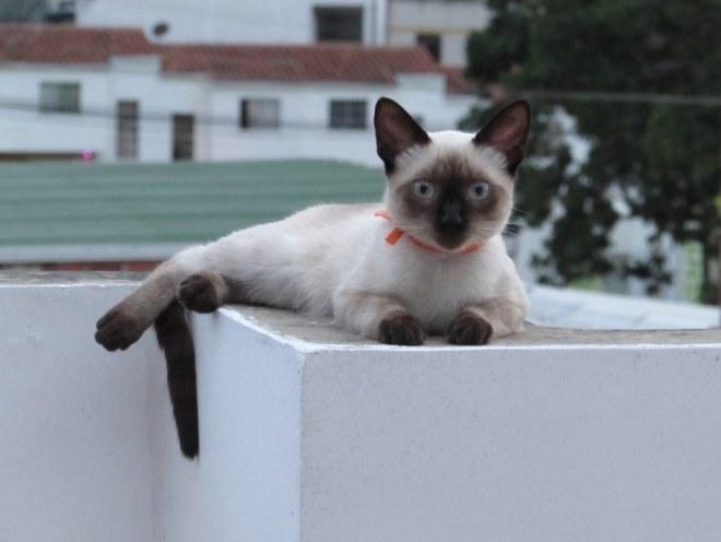 Кошка забралась на крышу и лежит