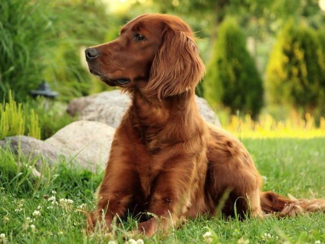 собака лечение цистита