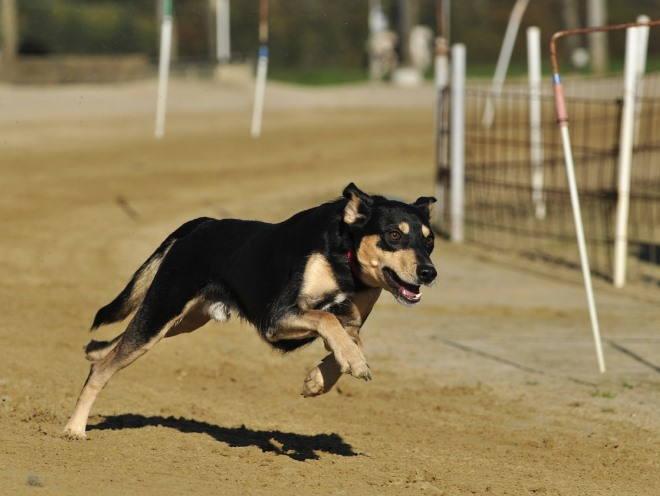 Собака быстро бежит по дороге