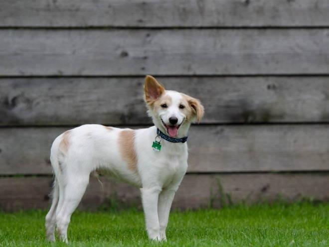 Собака гуляет по двору