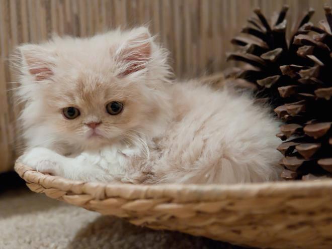 Котенок лежит в корзинке