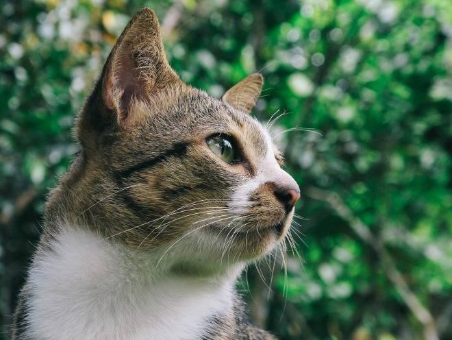Глаз у кошки сбоку