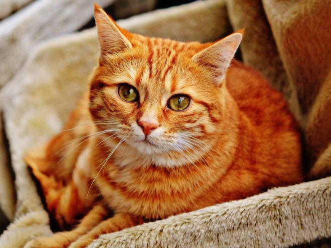 У кошки жалобный взгляд