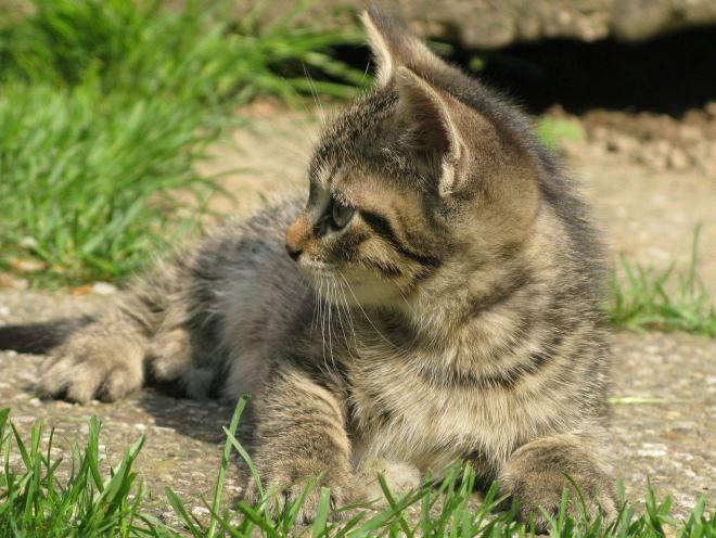 Котенок лежит на земле