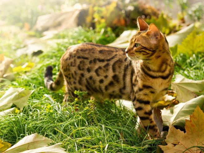 Кот на прогулке на природе