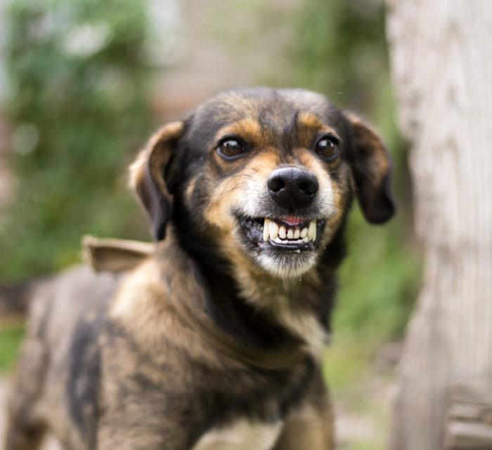 Бешенство у собаки симптомы и лечение