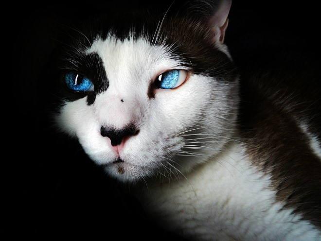 У кошки видно третье веко