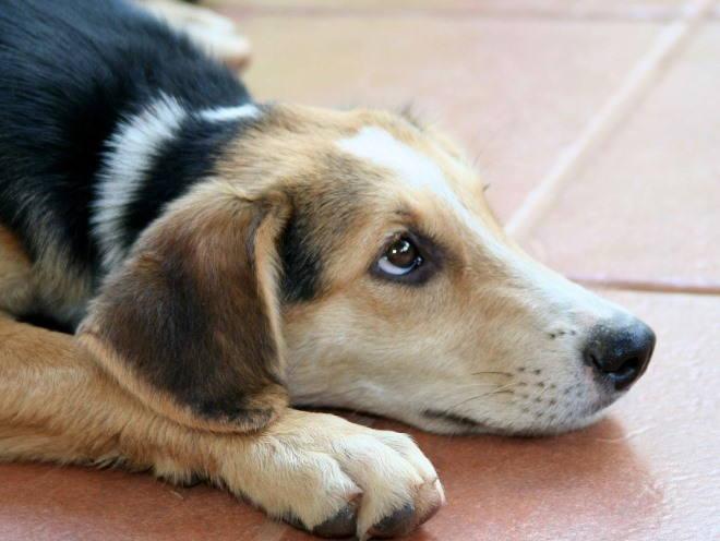 Собака присела в ожидании хозяина
