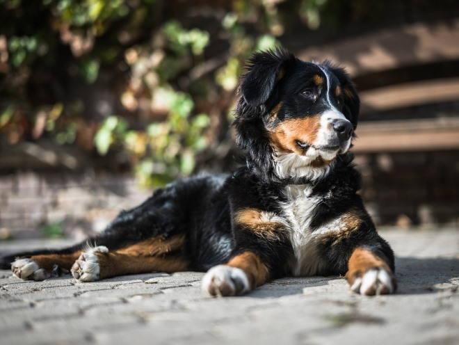 Собака отдыхает на дорожке в саду