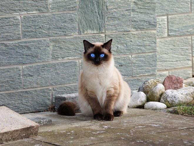 Кот сидит на уличной плитке