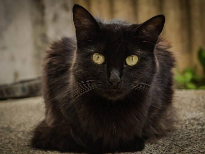 Черный кот лежит на улице