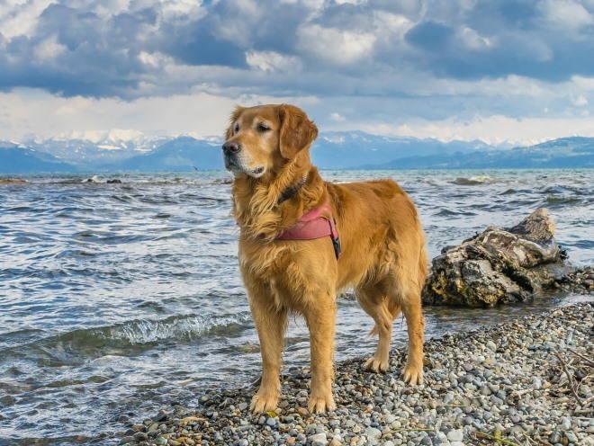 Собака играет возле воды