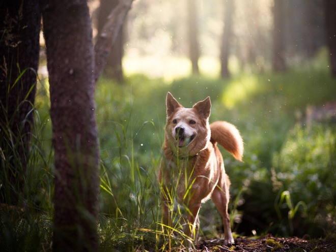 Собака играет в лесу