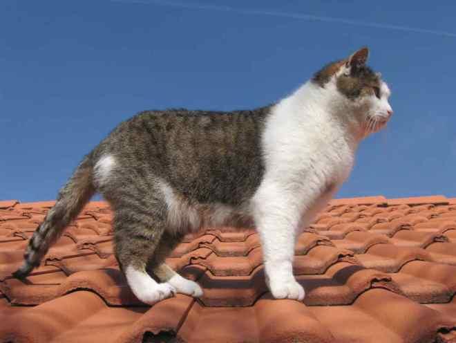 Кот гуляет по крыше