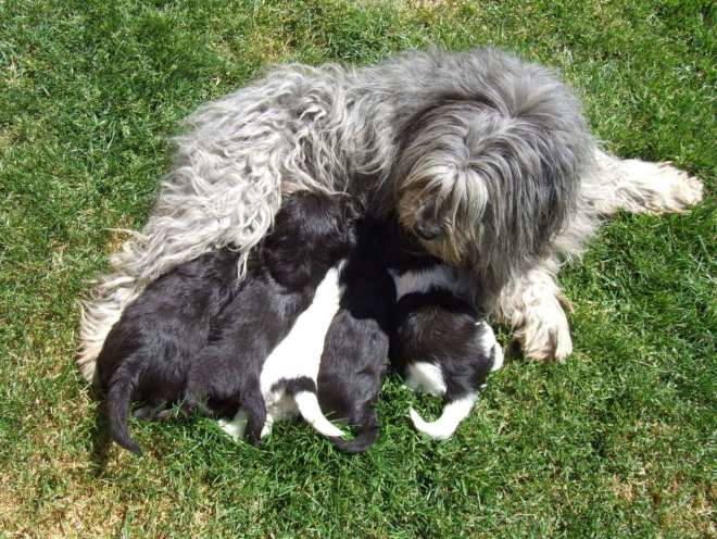 Собака кормит своих малышей