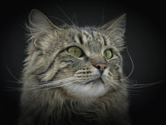 Кот что-то увидел