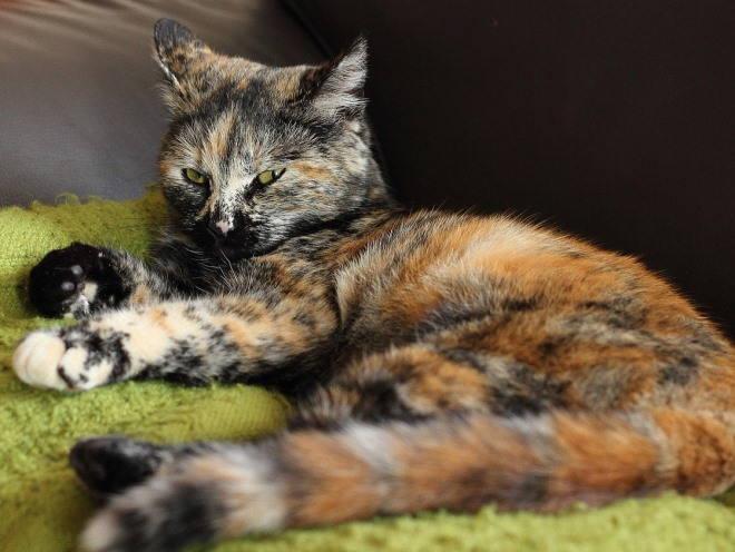 Кошка лежит на коврике