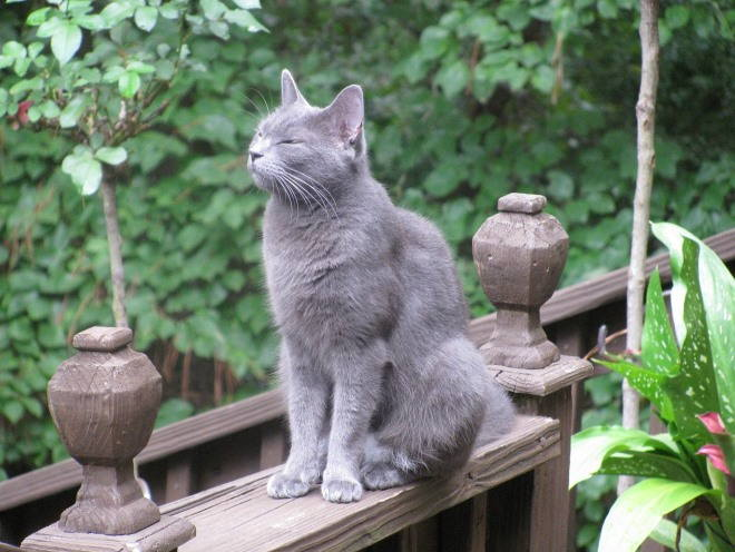 Кошка сидит в саду