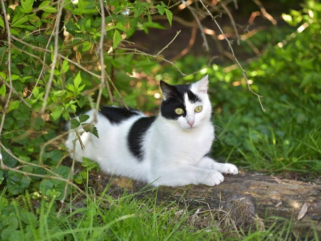 Кот гуляет в парке