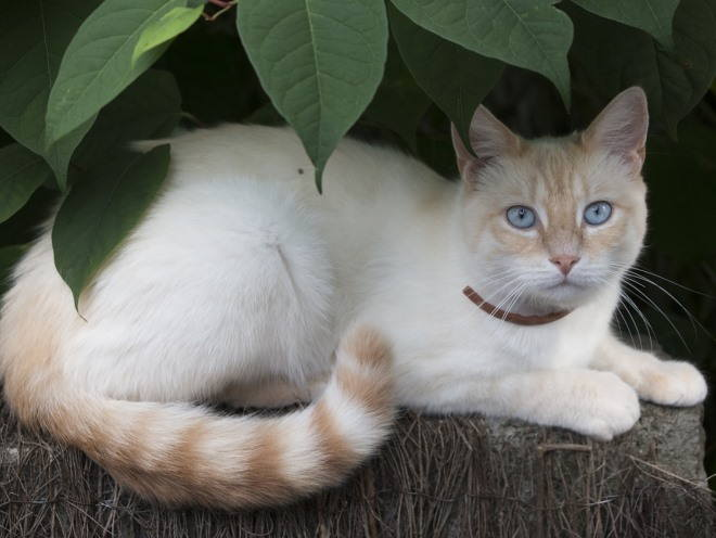Кошка отдыхает под деревом