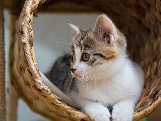 Котенок сидит в корзине