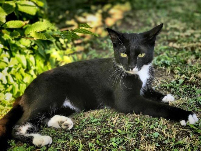 Кошка лежит на траве