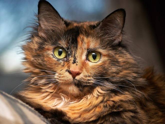 Кот внимательно смотрит