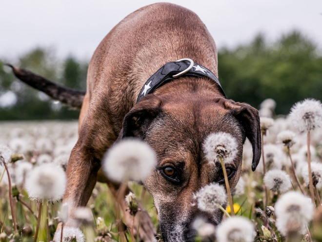 Собака гуляет по полю